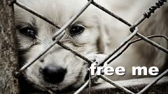 free-me